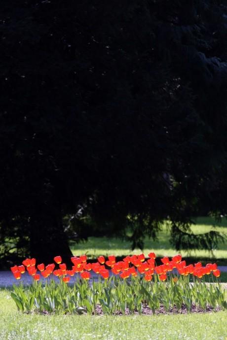 varazdin, 18042011 photo boris stajduhar